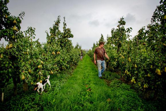 Wat moet de fruitteelt met ict uit Nederland en de VS?