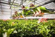 'Werkgevers wijzen uniform wettelijk minimumuurloon af'